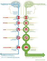 flexible mind vs set mind
